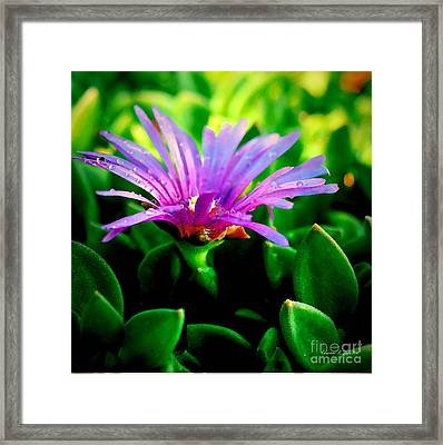 Pink Ice Flower IIi - A Floral Paintograph Framed Print by Christine S Zipps