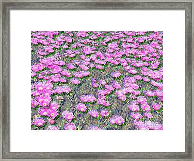 Pink Ice Plant Flowers Framed Print