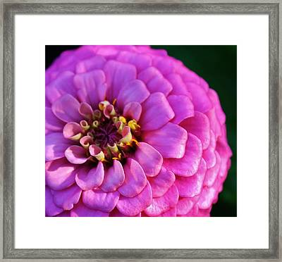 Pink Infusion Framed Print by Bruce Bley