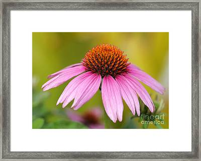 Pink Is In Framed Print by Sabrina L Ryan