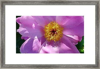 Pink Lady Framed Print by Linda Pope