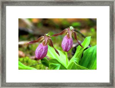Pink Lady Slippers Framed Print by Tony Gayhart
