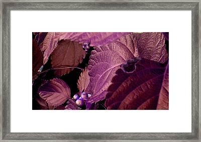 Pink Leaves Framed Print by Juliana  Blessington