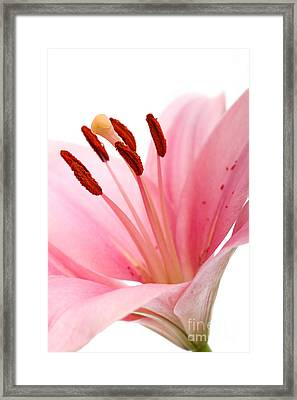 Pink Lilies 02 Framed Print by Nailia Schwarz