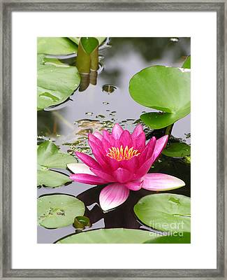 Pink Lily Flower  Framed Print by Diane Greco-Lesser