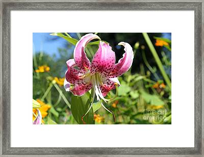 Pink Lily Framed Print by Theresa Willingham