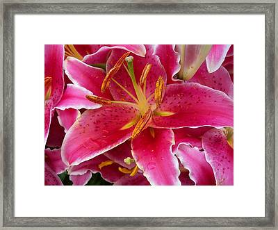 Pink Lily With Water Droplets Framed Print