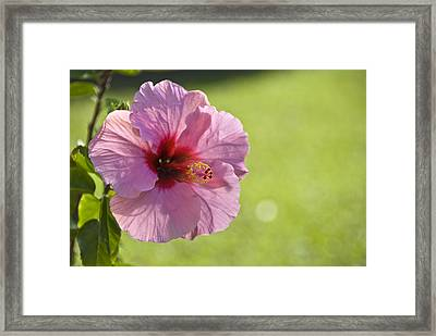 Pink Lipstick Framed Print by Chris Ann Wiggins