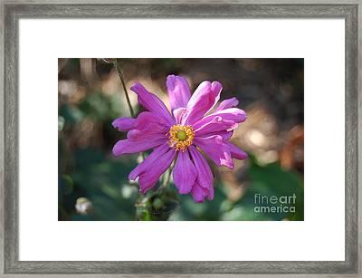 Pink Macro Framed Print