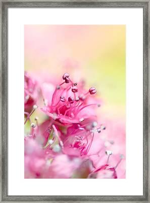 Pink Magic Framed Print by Sharon Johnstone