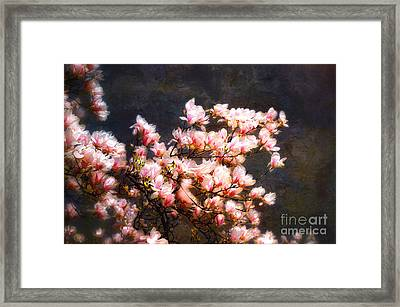 Pink Magnolias Framed Print by Elaine Manley