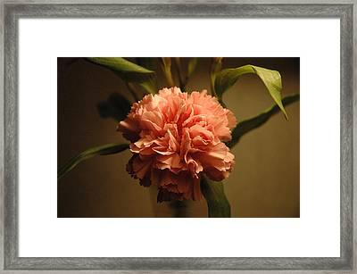 Pink Marigold Flower Framed Print by Rafael Figueroa