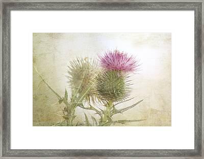 Pink On Green Framed Print by Margaret Hormann Bfa