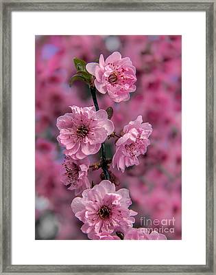 Pink On Pink Framed Print