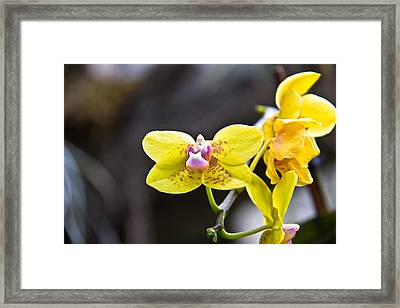 Pink On Yellow Framed Print