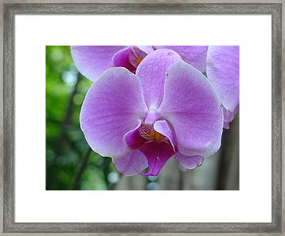 Framed Print featuring the photograph Pink Orchid by Charles and Melisa Morrison