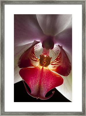 Pink Orchid Close-up Framed Print by Marc Garrido