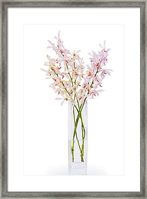 Pink Orchid In Vase Framed Print by Atiketta Sangasaeng