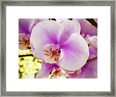 Pink Orchid Framed Print by Joe Carini - Printscapes
