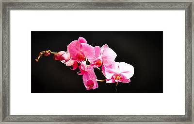 Framed Print featuring the photograph Pink Orchids At A Party by Ronda Broatch