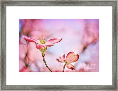 Pink Passion Framed Print by Darren Fisher