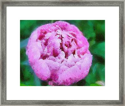 Pink Peony Framed Print by Elizabeth Coats