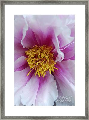 Framed Print featuring the photograph Pink Peony by Eva Kaufman