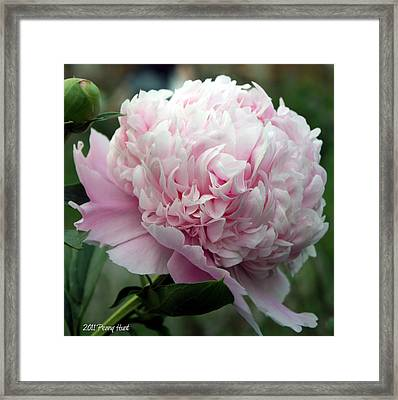 Framed Print featuring the photograph Pink Peony Perfection by Penny Hunt