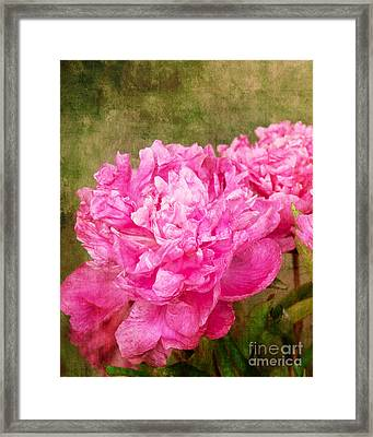 Pink Peony Texture 3 Framed Print by Bob and Nancy Kendrick