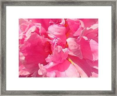 Pink Peony Framed Print by Tina Ann Byers