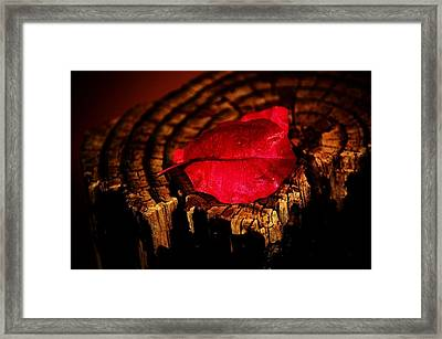 Framed Print featuring the photograph Pink Petal by Jessica Shelton