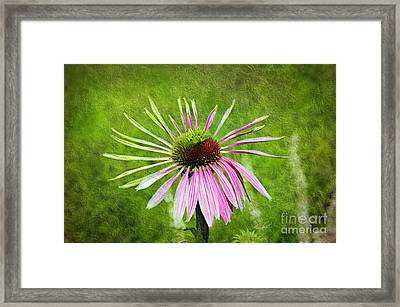 Pink Petals Framed Print by Andee Design