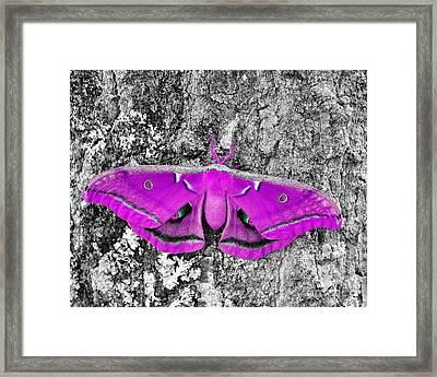 Pink Polyphemus Framed Print