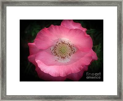 Pink Poppy Detail Framed Print by Yvonne Johnstone