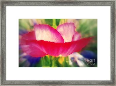 Pink Poppy Framed Print by Sacred  Muse