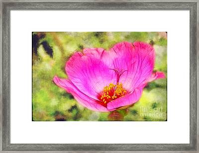 Pink Portulaca Framed Print by Judi Bagwell