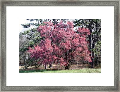 Pink Power Framed Print