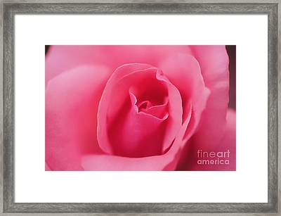 Pink Precious Powerful Rose Framed Print by Clayton Bruster