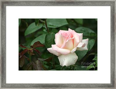 Framed Print featuring the photograph Pink Promise by Living Color Photography Lorraine Lynch