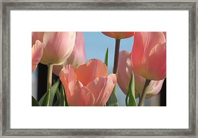 Pink Promise Framed Print