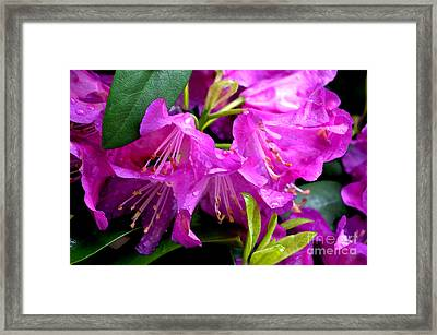Pink Reflections Framed Print by Pravine Chester