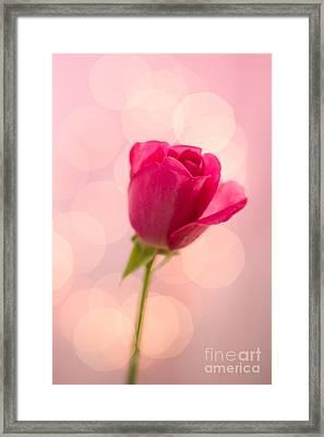 Pink Rose Bud Bokeh Framed Print by Ethiriel  Photography