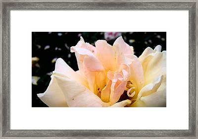 Pink Rose Framed Print by (c) Serge Jespers