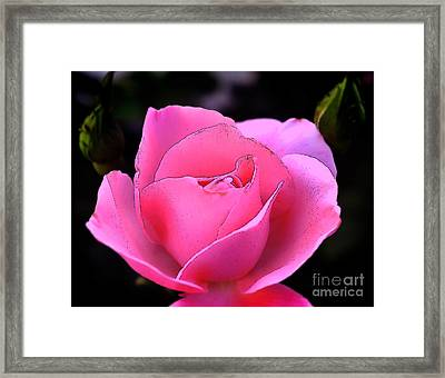 Framed Print featuring the photograph Pink Rose Day by Clayton Bruster