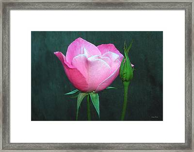 Framed Print featuring the photograph Pink Rose by George Bostian