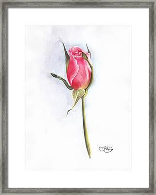 Pink Rose Framed Print by Muna Abdurrahman