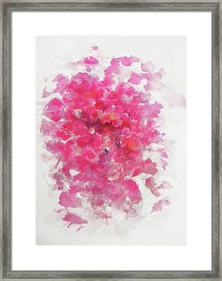 Pink Rose Framed Print by Rachel Christine Nowicki