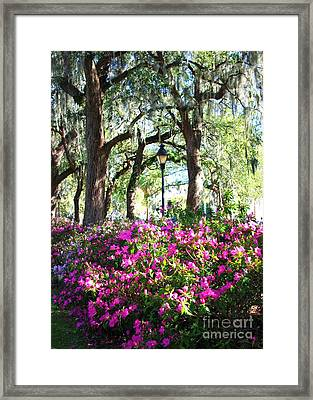 Pink Savannah Azaleas Framed Print