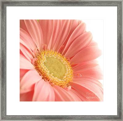 Pink Sherbert Blossom Framed Print