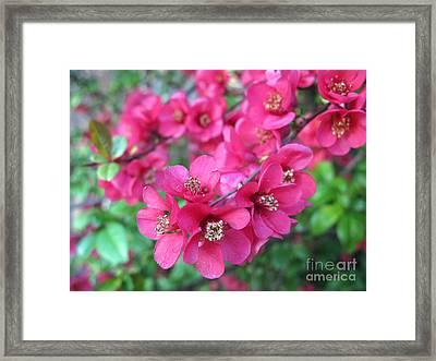 Pink Spring Blossoms Framed Print by Ausra Huntington nee Paulauskaite